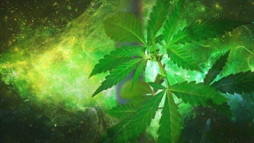 娛樂性大麻合法化之後