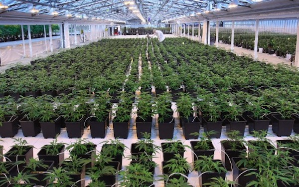 Aphria shares soar on reported talks with Altria for possible equity stake