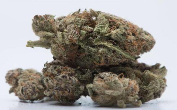 Alberta receives only fifth of the marijuana it ordered as country-wide shortage worsens-大麻短缺加剧,艾伯塔省仅五分之一的大麻订单收到货