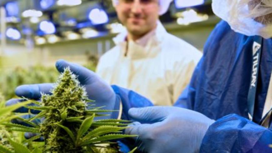 Marijuana grower Tilray soars more than 20% after Peter Thiel-backed fund says it won't sell