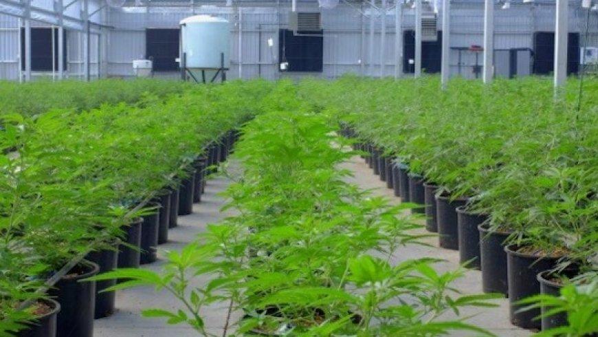 Aurora Cannabis Expands into Portugal, Enhancing European Market Leadership