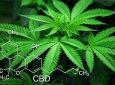 周一说市场:工业大麻,刺激全球投资者