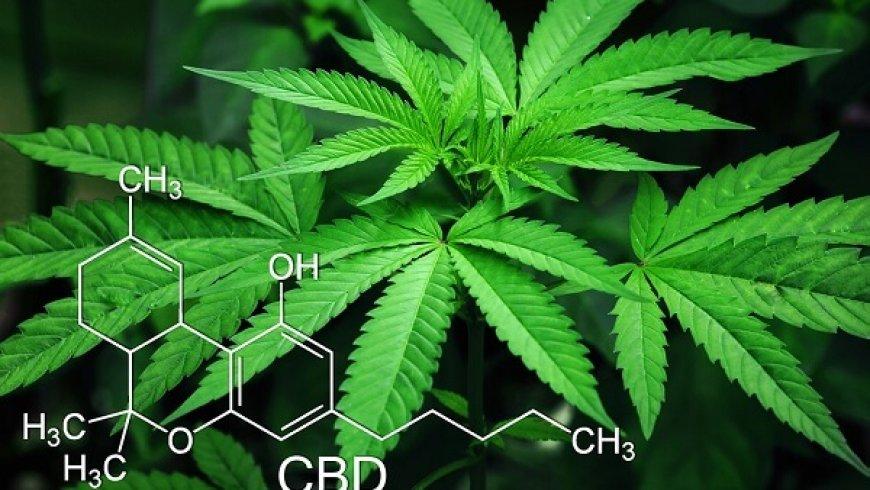 週一說市場:工業大麻,刺激全球投資者