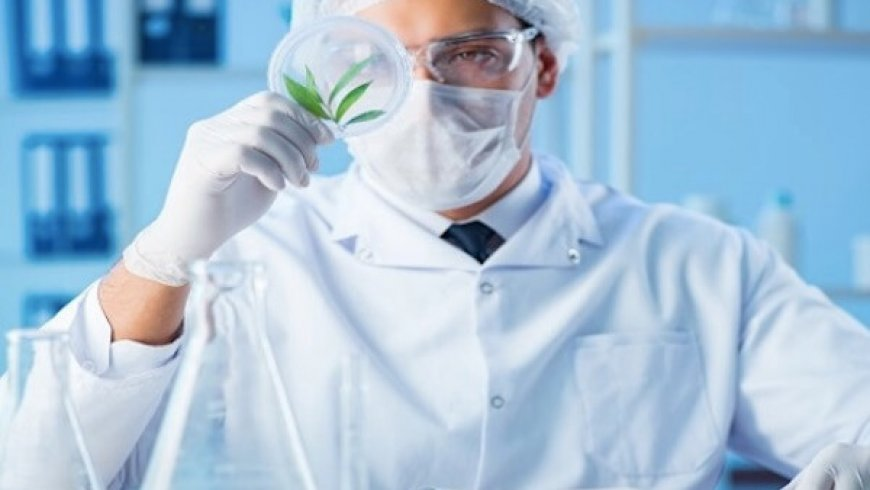 CURE Pharmaceutical Snags DEA License to Manufacture Pharmaceuticals From Cannabis
