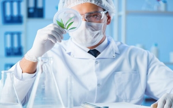 CURE Pharmaceutical Snags DEA License to Manufacture Pharmaceuticals From Cannabis,美国首家口服薄膜公司CURE 获DEA批准制造大麻药品