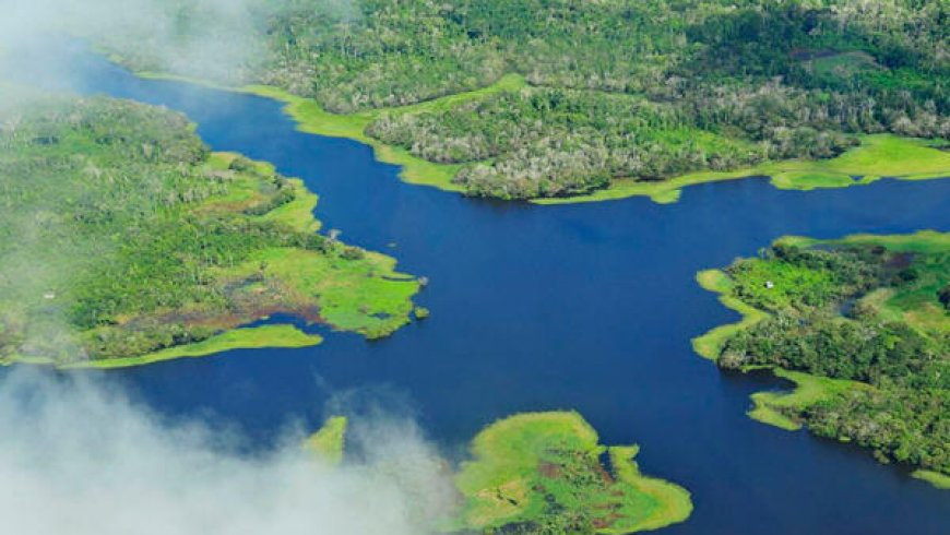 Brazil President says Amazon rainforest reserve should be opened to mining