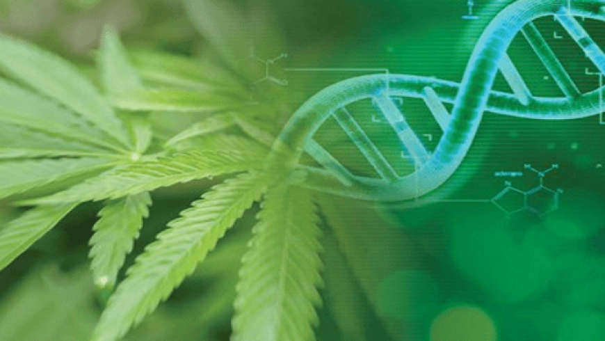 Medicinal Genomics announces Cannabis Pan-Genome project, a major advance in genetics for cannabis breeding