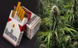 业绩前景堪忧,这只大麻股应当规避