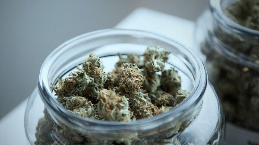 大麻行業最新動態