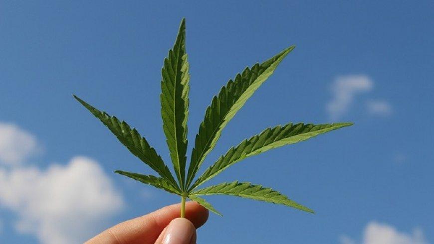 优质大麻产品短缺带来机会?这家加拿大大麻公司值得了解
