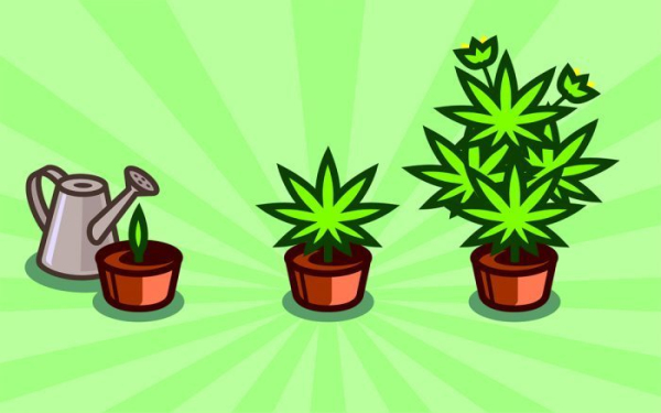 吸引 器 大麻
