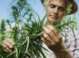 噓,這家創新含麻食品公司正在悄然爆發——周一說市場