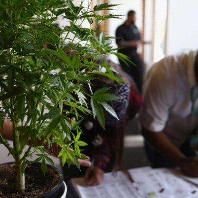 4年增長近兩倍!全球合法大麻支出預計將增至406億美元