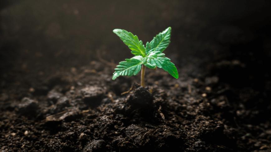 看圖說話:大麻投資者策略轉變,股權投資比例提升