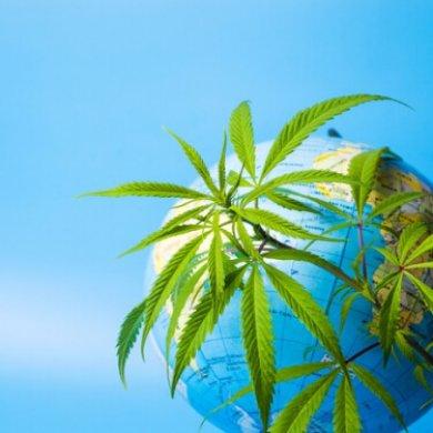 國際化布局領跑的3家大麻公司