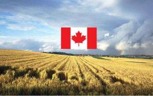 农业用地投资