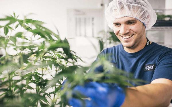 Canopy Growth Beckley Canopy 藥用大麻 收購