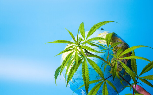 大麻 海外市場 Aurora Cannabis Tilray Canopy Growth