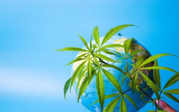 大麻 海外市场 Aurora Cannabis Tilray Canopy Growth