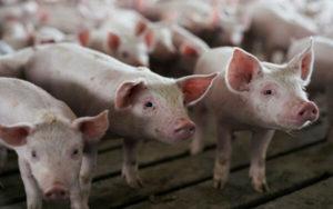 贸易战 农产品 关税