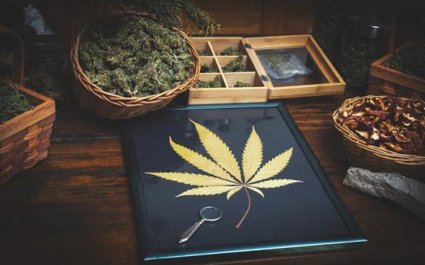 加拿大大麻股 Supreme Cannabis 大麻品牌7ACRES Canopy Growth