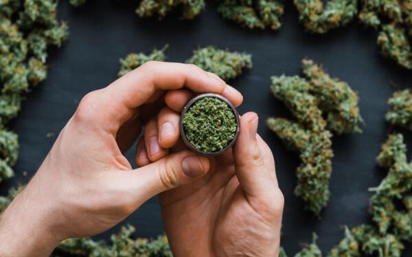 看圖說話:8月大麻融資額同比增近兩倍,集中于種植和零售