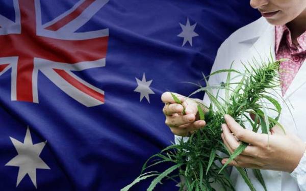 堪培拉通过大麻合法化法案