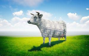 加拿大现金牛股票