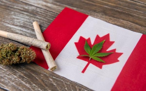 加拿大最大大麻股