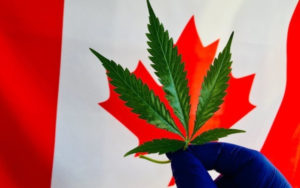 加拿大大麻股