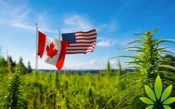 医疗保健精选——Aurora Cannabis借收购进军美国市场,Inovio发表COVID-19疫苗数据,股价上涨