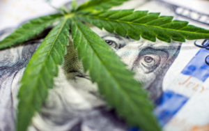 全球最大大麻公司
