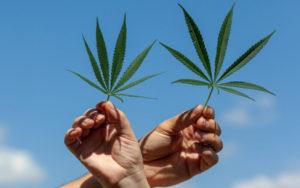 大麻行业并购