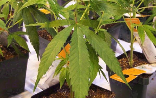 医疗保健精选——Aurora Cannabis拟进行公开发售,加拿大批准B Becton, Dickinson and Company的新冠快速测试