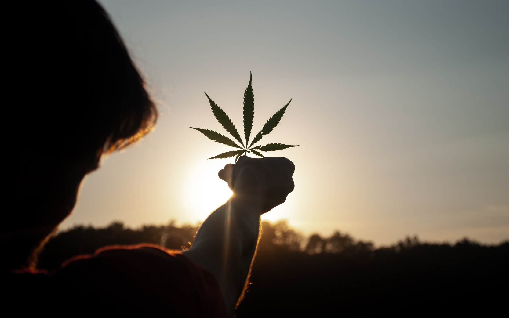 大麻 投资