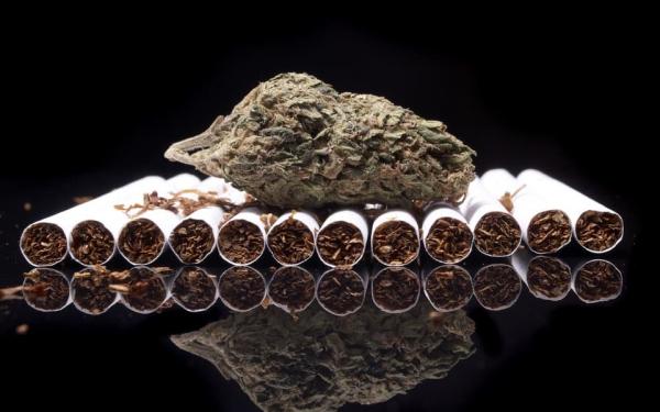 烟草和大麻
