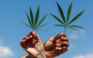 美国大麻公司
